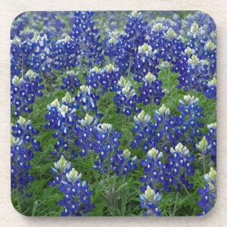 Texas Bluebonnets Field Photo Beverage Coasters