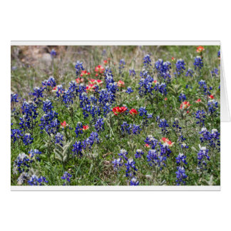 Texas Bluebonnets & Indian Paintbrush Wildflowers Greeting Cards