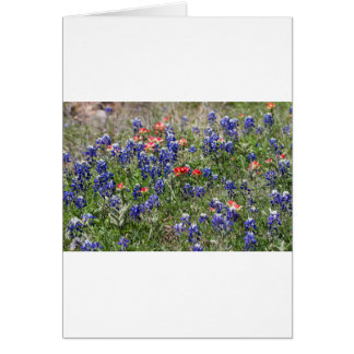Texas Bluebonnets & Indian Paintbrush Wildflowers Card