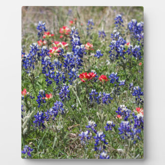 Texas Bluebonnets & Indian Paintbrush Wildflowers Plaques