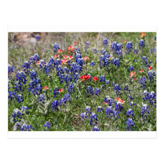 Texas Bluebonnets & Indian Paintbrush Wildflowers Post Card