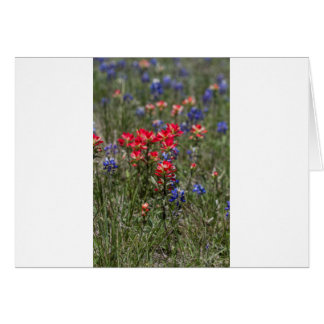 Texas Indian Paintbrush and Bluebonnet Wildflowers Cards