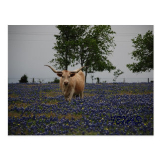 Texas Royalty Post Cards