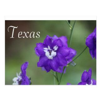Texas Wildflower Postcard-Purple Wildflower Postcard