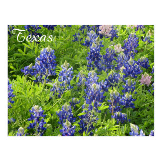 Texas Wildflower Postcard-Texas Bluebonnets Postcard