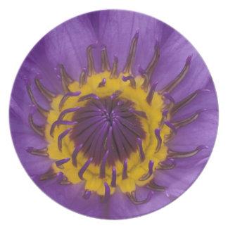 Thailand, Bangkok, Purple and yellow lotus Plate