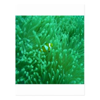 thailand fish postcard