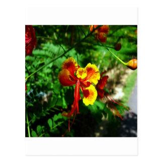 thailand flower postcard