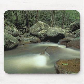 Thailand, Kohsamui Island, Rainforest landscape. Mouse Pad