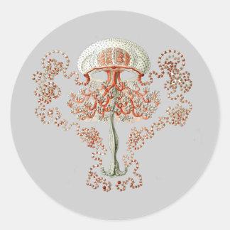 Thamnostylus dinema classic round sticker