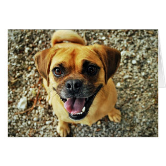 Thank You Card with Happy Pug