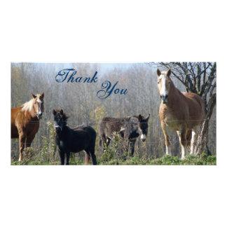 Thank You- Horses, Pony, and Donkey Photocards Photo Card