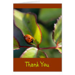 Thank You Notecard with Ladybug Design Greeting Cards