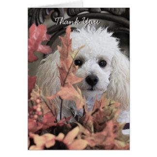 Thank You poodle  dog notecard