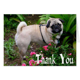 Thank You Pug Puppy Dog Blank Note Card