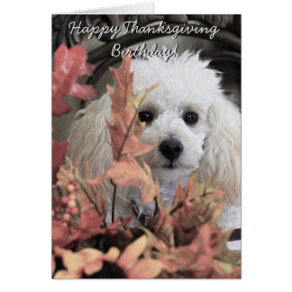 Thanksgiving birthday poodle  dog notecard