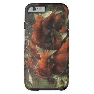 The Adams River sockeye run is one of the Tough iPhone 6 Case