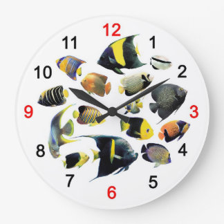 The applying clock of Marine Angelfish