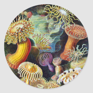 the Art of Nature by Ernst Haeckel Classic Round Sticker