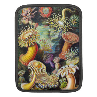 the Art of Nature by Ernst Haeckel iPad Sleeve