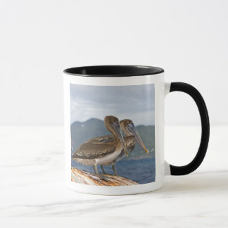 The Brown Pelican ( Pelecanus Occidentalis ) Mug