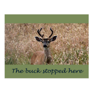 The Buck Stopped Here Post Cards