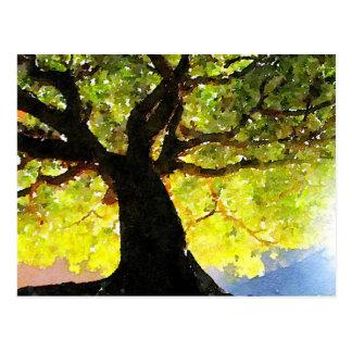 The Climbing Tree Postcard