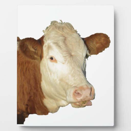 The Cow Plaque