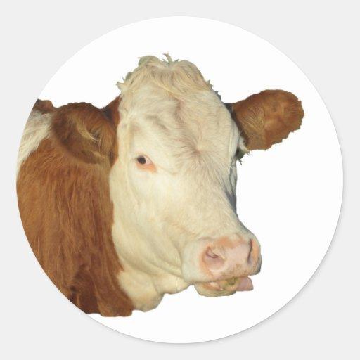 The Cow Round Sticker