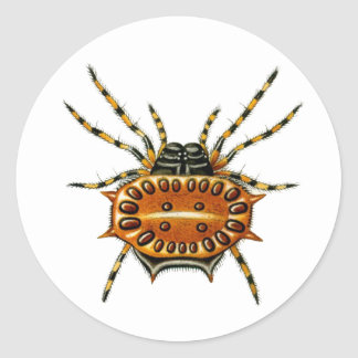The crab spider and spiny orb-weaver classic round sticker