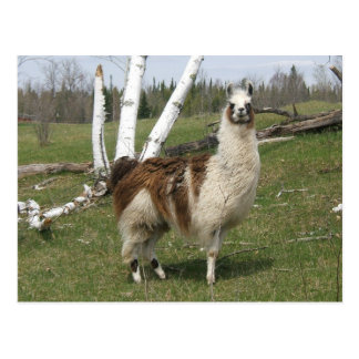 THE DAILY LLAMA POSTCARDS