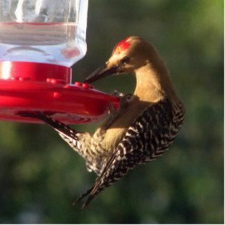 The Gila Thinks it's a Hummingbird Standing Photo Sculpture