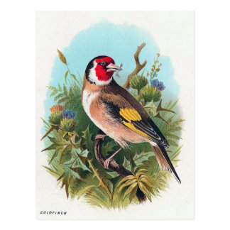 The Goldfinch Postcard