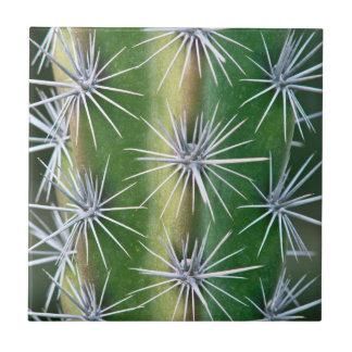 The Huntington Botanical Garden, Octopus Cactus Small Square Tile
