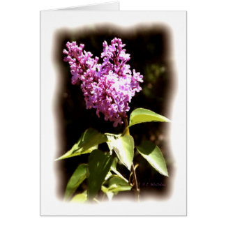 The Littlest Lilac Greeting Card
