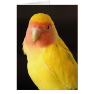 The Lovebird Card