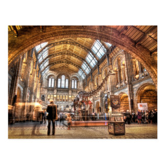 The Natural History Museum London Post Card