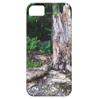 The Old Tree iPhone 5 Covers