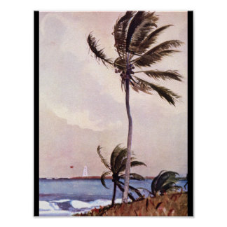 The Palm Tree, Nassau',_Landscapes Poster