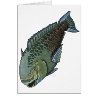 THE PARROT FISH CARD