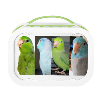 The Parrotlets Green School Lunch box plastic