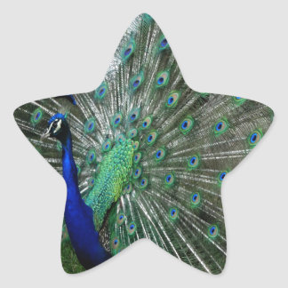 The Peafowl Dance Star Sticker