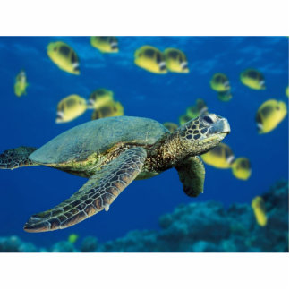 The slowest Green Sea Turtle Standing Photo Sculpture
