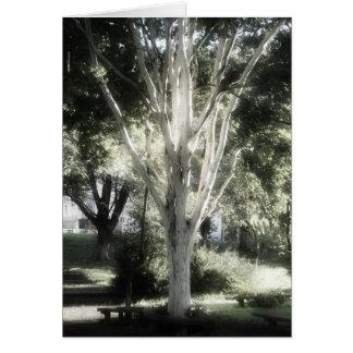The tree  A árvore  L'arbre El árbol Card