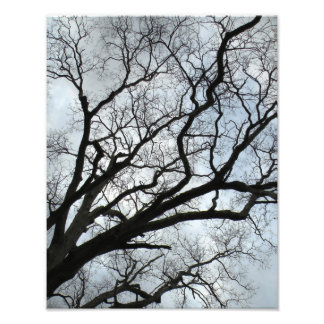 The Tree's Veins Photo Print