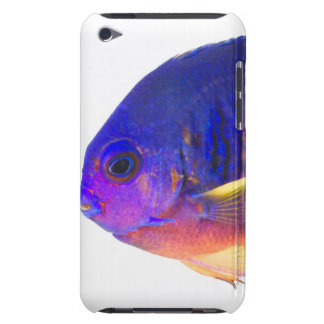 The two-spined angelfish barely there iPod cases
