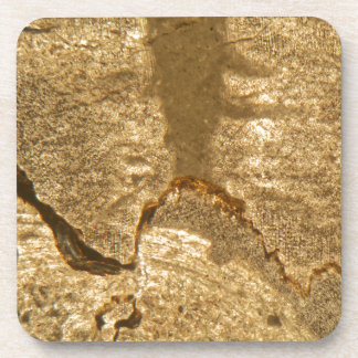 Thin section of Triassic carbonate under the micro Coaster