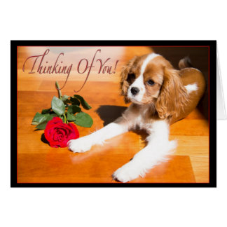 Thinking Of You Cavalier King Charles Spaniel Pup Greeting Card