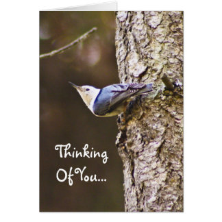 Thinking Of You Woodpecker Card