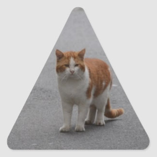 Thomas Ginger And White Cat Triangle Sticker